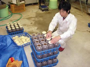 焼酎粕廃菌床実用化試験画像