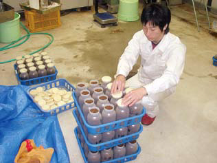 Test of practical applicaton with abolition bacerium floor of shochu lees